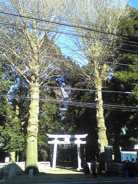 香取神社 - 柏